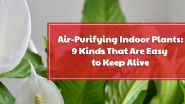 Air-Purifying Indoor Plants: 9 Kinds That Are Easy to Keep Alive